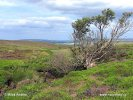 Hryzec vodní (Arvicola terrestris)