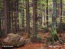Národní park Bavorský les (DE)