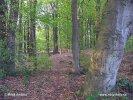 Národní park Drents-Friese Wold (NL)
