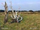 Národní park Hoge Veluwe (NL)