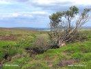 Národní park North York Moors (UK)