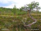 Národní park Torronsuo (F)