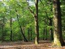 Národní park Utrechtse Heuvelrug (NL)