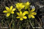 Krytosemenné rostliny s žlutými květy