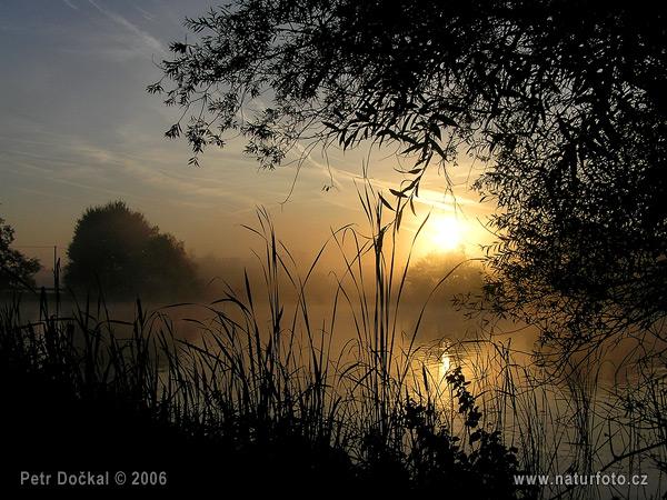 Chladné ráno u rybníčka - foto č. 3357