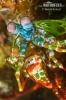 Strašek paví (Odontodactylus scyllarus)