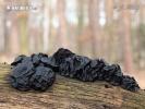 černorosol bukový (Exidia glandulosa)