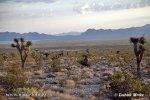 USA - Nevada (Nevada, USA)