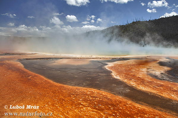 Yellowstone, NP (Wyoming, USA)