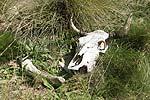 Lebka (Osteon)