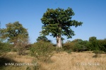 Bandia přírodní rezervace (Bandia)