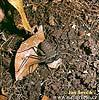Krabovec (Amblypygi sp.)