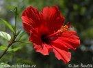 Krytosemenné rostliny s červenými květy