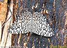 Motýl (Sphinx sp.)