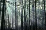 Ráno v lese (les)