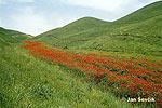 Tádžikistán (TAD)