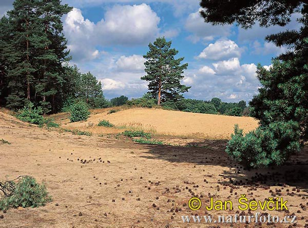 Písečná duna foto č 2935