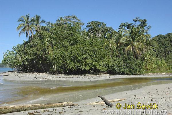 Pobřeží karibiku (cr)