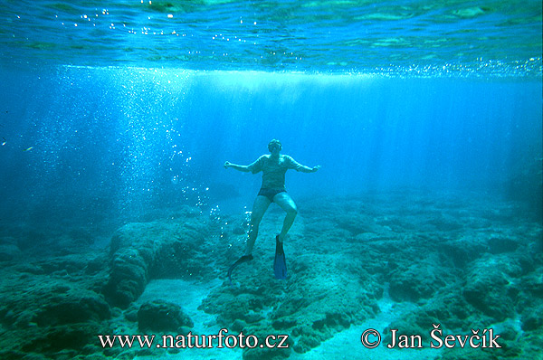 76fc804a2 Potápanie šnorchlovanie | Naturfoto