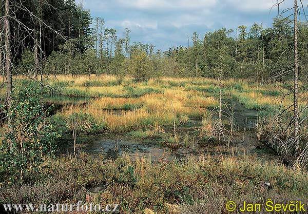 Rašeliniště pele foto č 2958