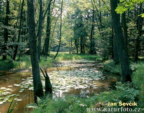 Stará řeka 3 foto č 2220