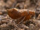 Ostatní hmyz